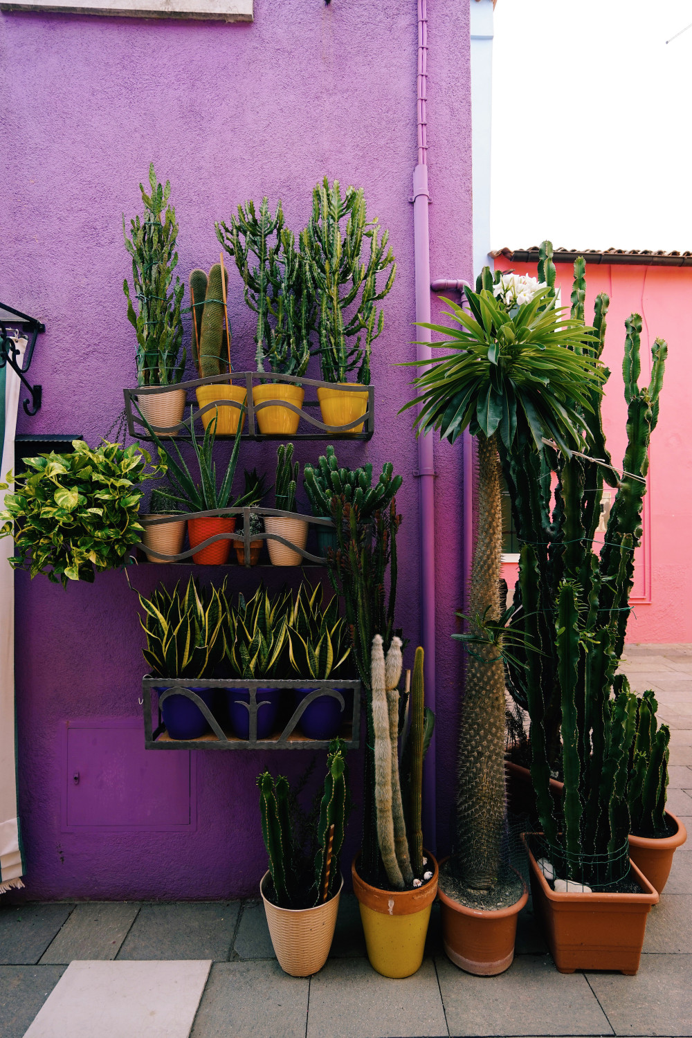 burano-succulents-dante-vincent-photography
