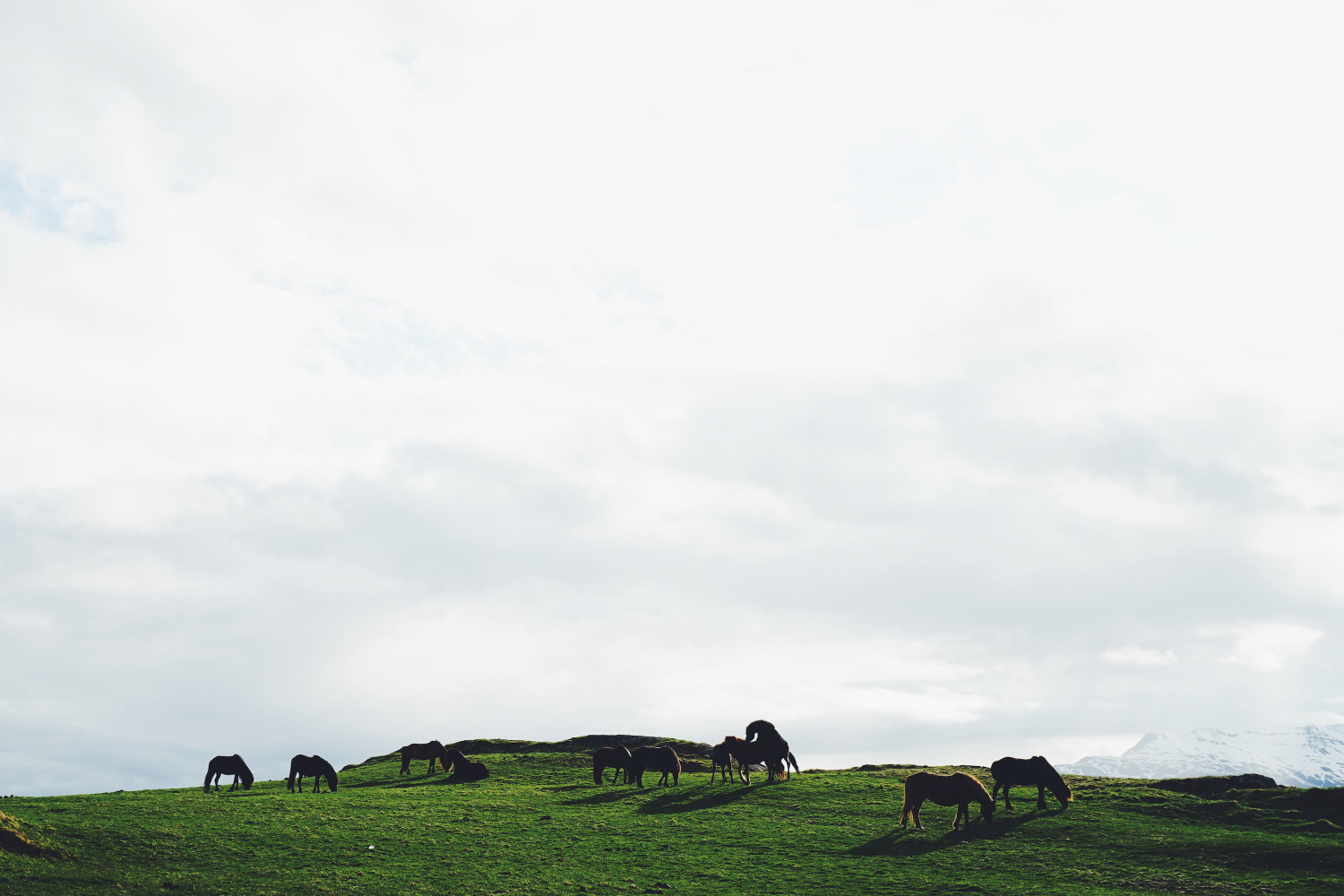 iceland-horses-dante-vincent-photography-38
