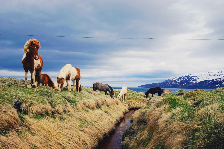 icelandic-horses-dante-vincent-photography-87