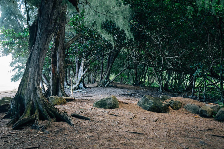 kauai-forest-dante-vincent-photography