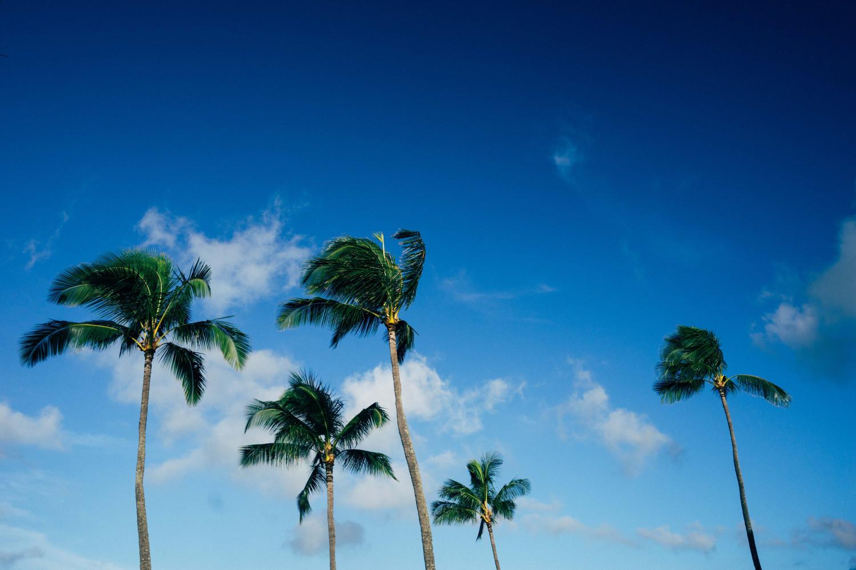 kauai-palm-trees-minimal-dante-vincent-photography
