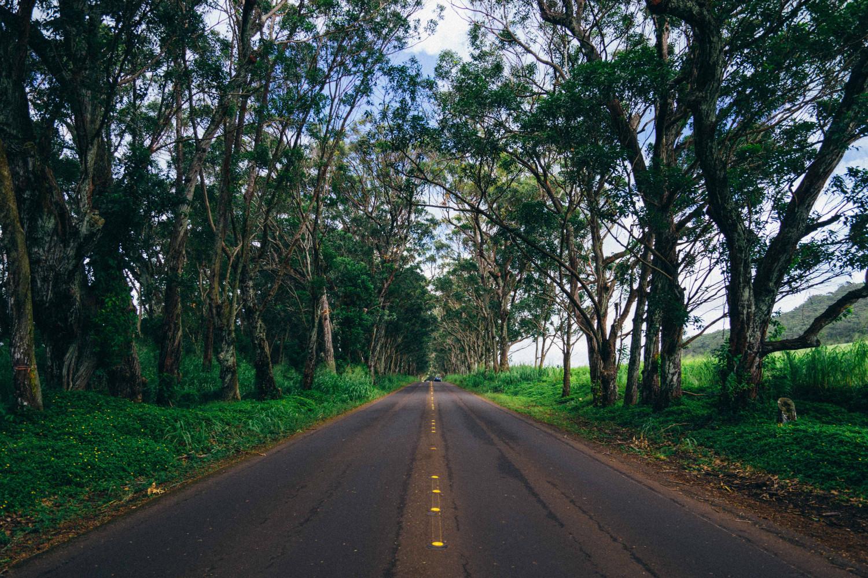 kauai-tree-tunnel-dante-vincent-photography